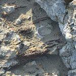 Why use basalt rebar vs steel rebar for reinforcing concrete?